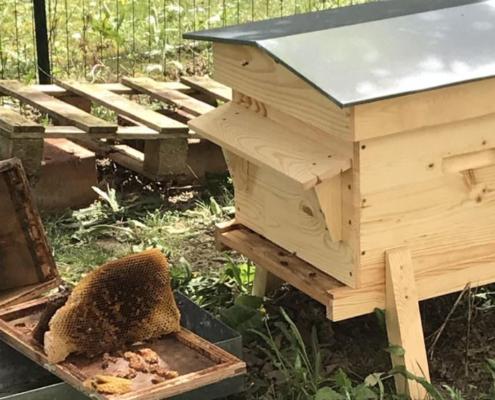 Travaux de printemps au rucher de CARDONNEL Ingénierie